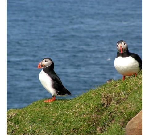Ferski otoki